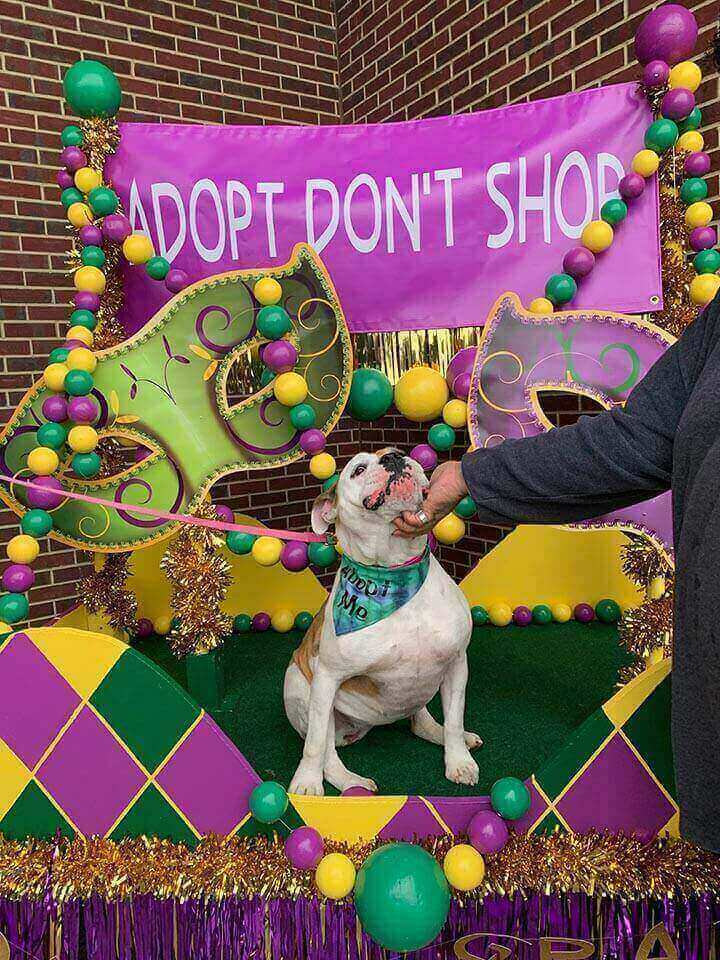 Maverick Harley-Davidson Pawdi Gras for No Borders Bulldog Rescue